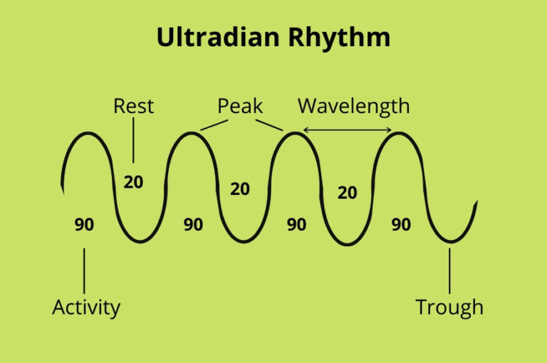 Ultradian Rhythm Affects Productivity When Working From Home Diagram